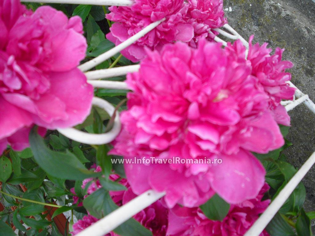 obzor1-flori