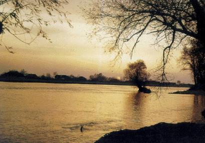 Delta Dunarii - ECOSISTEMELE DELTEI