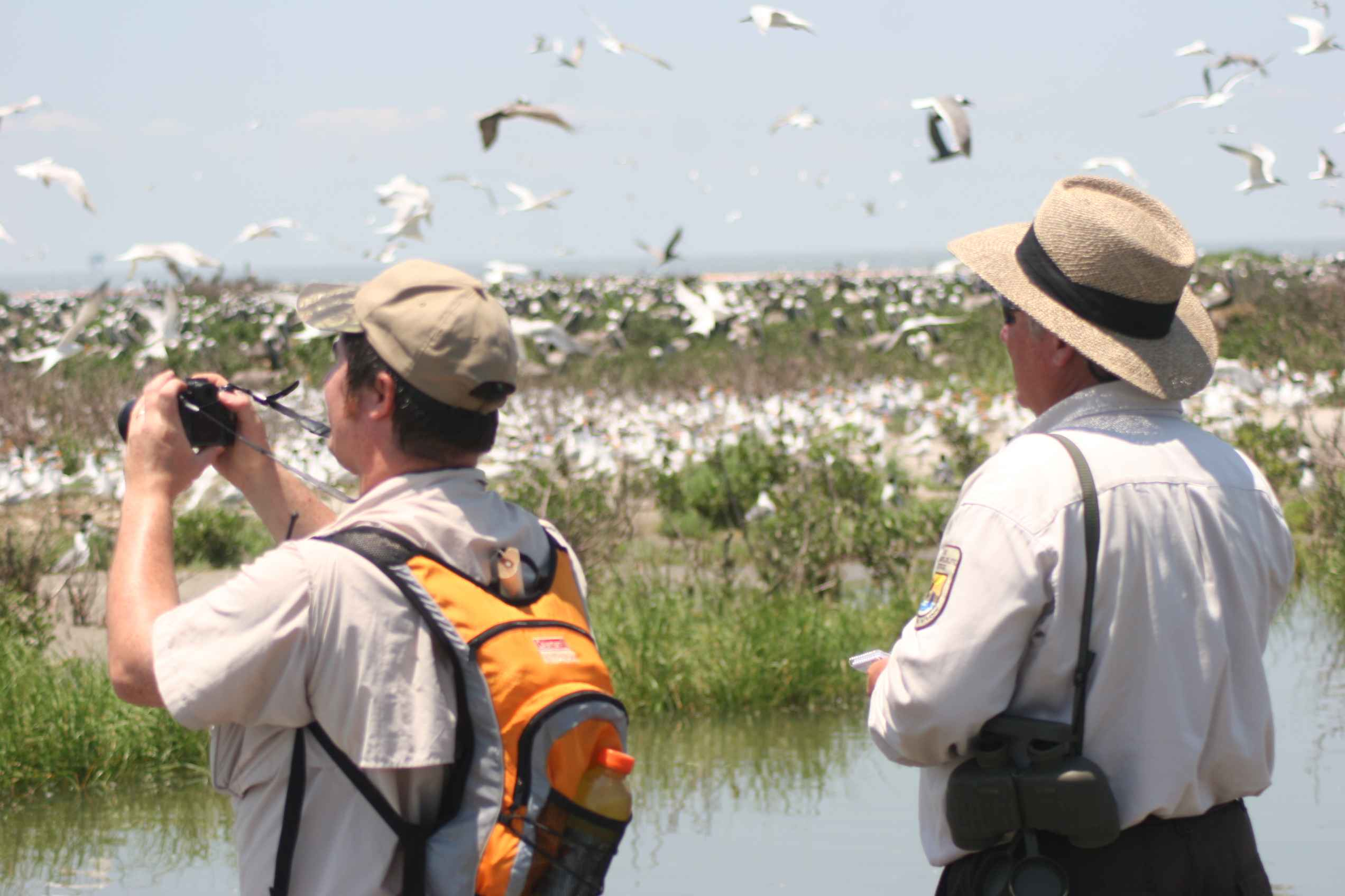Imagine tur Delta Dunarii birdwatching/photo tours